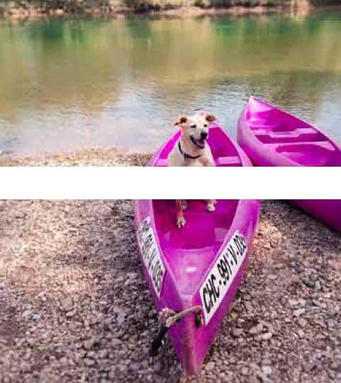 descenso canoas animales
